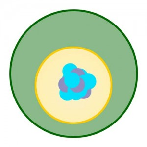 Interphase of Mitosis