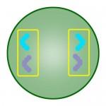 telophase of mitosis