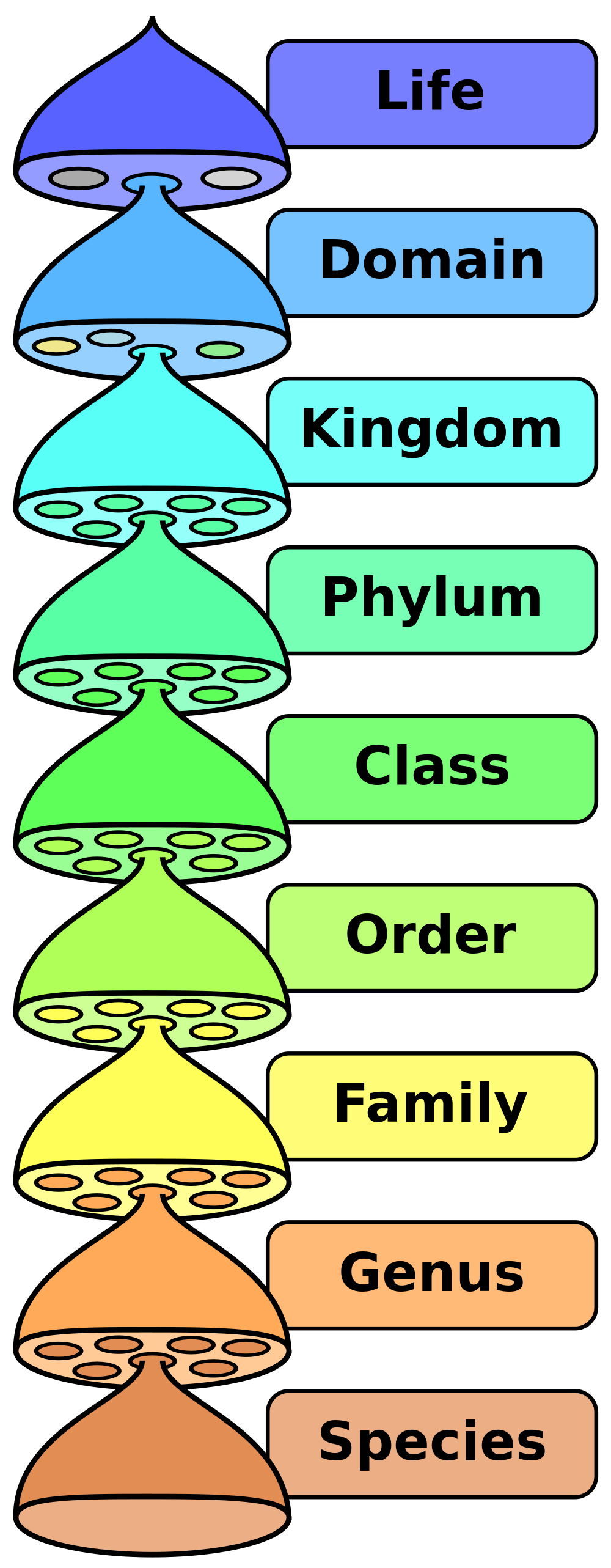 Biological_classification – DBriers.com