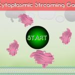 Cytoplasmic Streaming Flash Mini Game