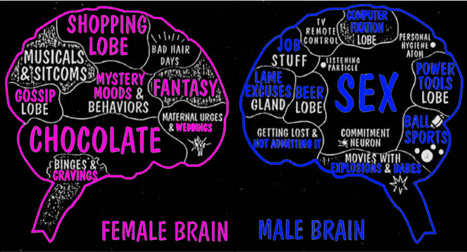 Brain-gender-slide